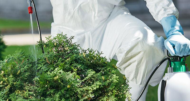 Pflanzenschutz durch profesionelle Schädlingsbekänpfung